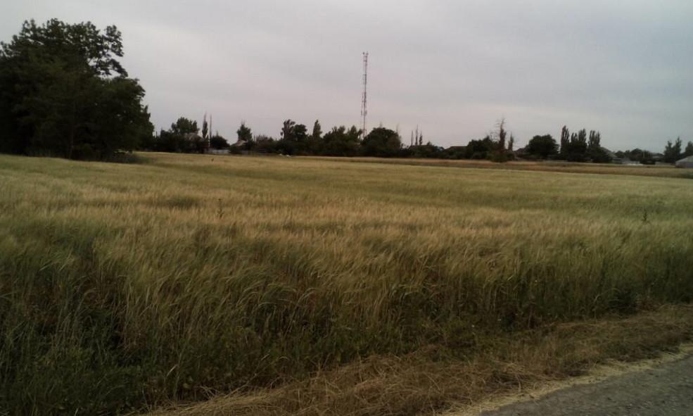 Рынок земельных участков в Подмосковье: выгодное вложение или пустая трата