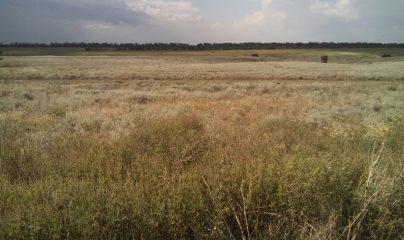 Аренда земель сельхозназначения